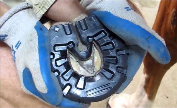 Glue Shoes New Forest Farrier